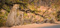 4-day Midweek offer: Kruger National Park Safari and Panorama Route Tour